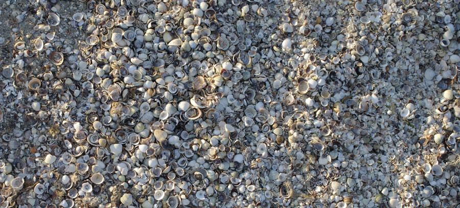 Ракушечный берез  в Казачьей бухте, Азовское море