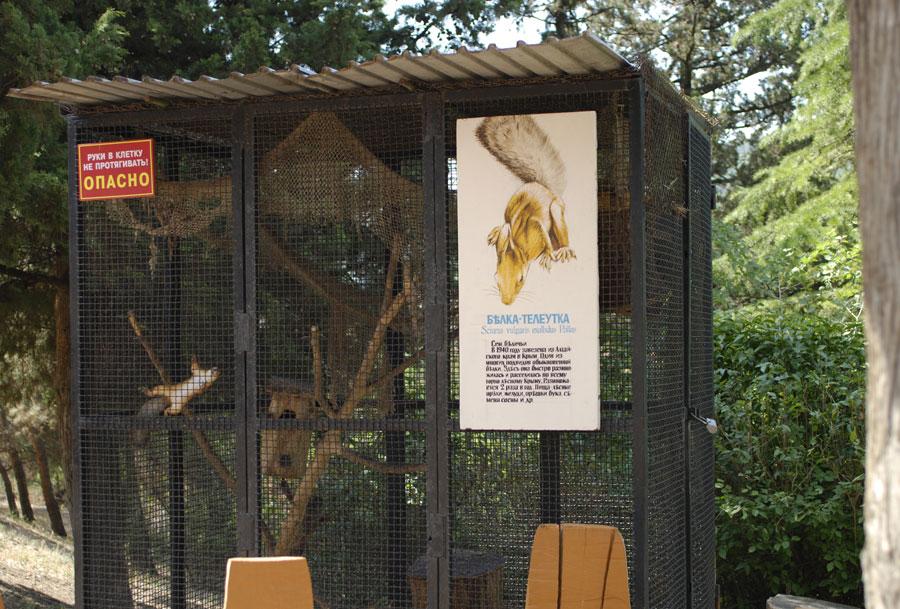 При заповеднике расположен миниатюрный дендрозоопарк. Наряду с нормальными животными типа лис и козлов, тут проживает Белка-Телеутка.