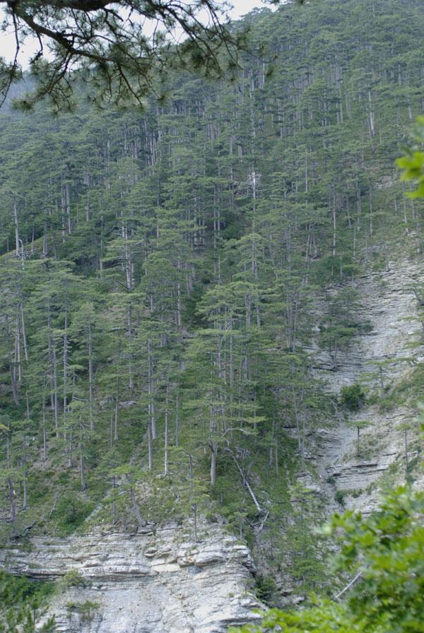 В заповеднике сохранился буковые, сосоновые, дубовые леса. Некоторые образцы достигают 2-3 метров в обхвате.